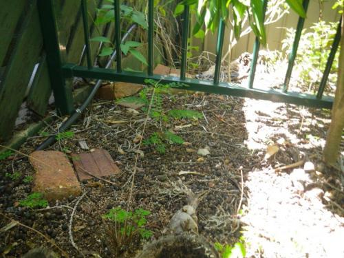 Different metal fence – same issue but with loose gravel underneath fence