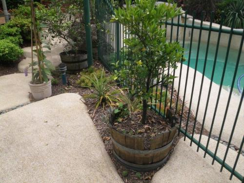 Pot plants shouldn't be positioned within 300mm on the outside of a pool fence