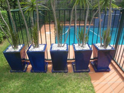 Oh dear! – 5 pots plant next to pool fence – which one will I use to climb fence?