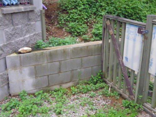Not much point having this inward facing non-compliant gate where it is, as one could simply climb over the wall & enter an otherwise unprotected pool zone