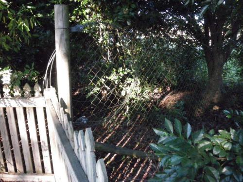 A chain wire fence with 30 degree support post meets an otherwise compliant timber paling pool fence