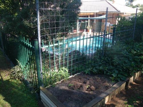 Wire mesh attached to pool fence as a trellis for the adjacent vegetable garden